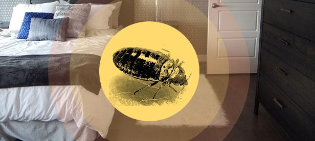 Traitement des punaises de lits